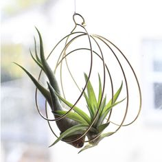 Ornament for now // a little hanging sculpture for later. We ♥︎ air plant anything
