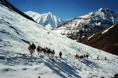 Book Himalaya Tours Packages @ best price at Walk to Himalayas. We help you explore the land of Uttarakhand, Ladakh, Himachal, Sikkim, and Bhutan. Book Now! http://walktohimalayas.com/services/trekking/