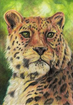 """""""Big Kitty"""" Polychromos pencils on fine paper, from reference photo by Paul Fine Cat Sketch, Fine Paper, Polychromos, Sketches, Kitty, Photo And Video, Big, Cats, Artwork"""