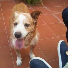 SIMBA, perro de 17 años perdido en Alcalá de Guadaíra (Sevilla) zona centro.