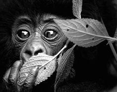 Stunning Wildlife Images (© David Yarrow)