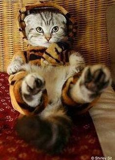 tiger...very cute...