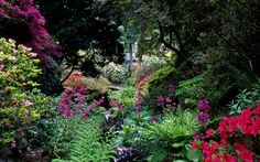 Bodnant Gardens, Conwy, Wales, UK | Luxuriant planting around a small stream – candelabra primula, ferns, azaleas and water side plants