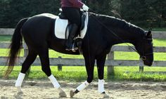 How To Stretch Your Horse Over The Topline | Posted by Horse Listening