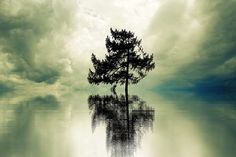 Loneliness, Tree, Lonely, Landscape