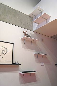 Musings » Blog Archive » Good Designs For Happy Cats – and Owners!
