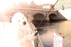 Icebjorn fishing in Stockholm. #fishing, #savethearctic, #ilovearctic, #climatechange
