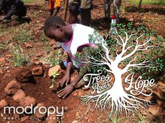 #TreesRootsHope  Through trees, the foundation of life can grow and bring hope to underdeveloped countries throughout the world.  #Modropy support Trees for the Future. modropy.org