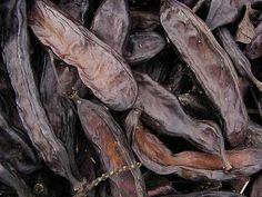 Tropical Fruit Photo Gallery: Carob