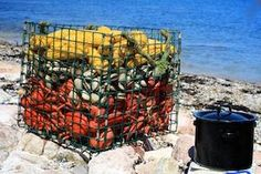 Downeast Lobster Bake shipped right to you door!   www.dorrlosbter.com