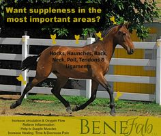 How does your horse perform?  Consider #benefabproducts to help your horse…