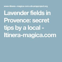 Lavender fields in Provence: secret tips by a local - Itinera-magica.com