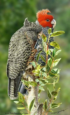 amazing and beautiful picture of parrots very #beautiful birds in amazing…