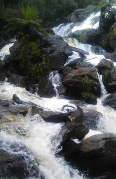 St Columba Falls, Tasmania, Australia by dolly St Columba, Waterfall Fountain, Largest Countries, Future Travel, Tasmania, Australia Travel, Beautiful Landscapes, Places To Go, Beautiful Places