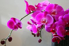 With regard to the flowering of the o Cascading Wedding Bouquets, Wedding Table Flowers, Real Flowers, Colorful Flowers, Orchid Wallpaper, Hd Wallpaper, Fuchsia Flower, Blue Orchids, Flower Branch