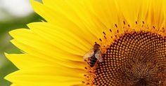 Un eco diserbante, al 100% naturale, che non altera il ph del suolo e non minaccia la vita di api e farfalle. L'ultimo regalo dell'imprenditrice sarda votata alla difesa dell'ambiente e al riuso. Vi a