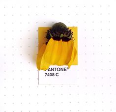 Personal project by Inka Mathew. Color matching small, found objects to Pantone stickers.   Example here: Pantone 7408 color match. Texas Coneflower.   http://tinypmsmatch.tumblr.com/