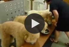 Four Dogs Praying Before Dinner in China, But What Happens After... MUST WATCH