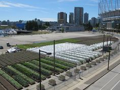 Situated on Pacific Boulevard between the busy overpass, BC Place Stadium, and the bustling seawall at False Creek, SOLEfood Urban Farm's newest (and, at two acres, its largest) site is a highly-visible sign that urban agriculture has arrived in Vancouver.                             Down below, SOLEfood co-founder Michael Ableman walks between the rows pointing out the crops: bok choy, eight types of kale and a new variety of strawberries bred in France that they're trying out