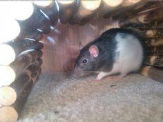 Da ist Ratatouille meine süße ich liebe sie so sehr