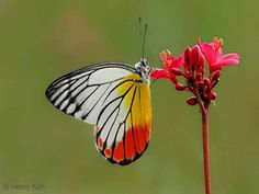 Colourful lady butterfly.
