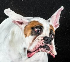 shake 4 Doggy Distortions – High Speed Photography by Carli Davidson