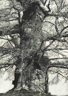 View Drawings of Old Trees summer 2010 by Patrick van Caeckenbergh on artnet. Browse more artworks Patrick van Caeckenbergh from Zeno X Gallery. Gravure Illustration, Illustration Art, Illustrations, Arte Yin Yang, Academic Drawing, Old Trees, Tree Forest, Jolie Photo, Art Graphique