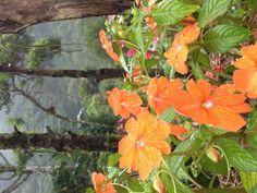 Flores de Costa Rica