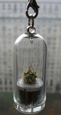 The Japanese are taking the world of botanical gadgets by storm. Just today I spotted this awesome tiny pet-plant on Japanese gadget site Compact-Impact. Mini Cactus, Cactus Flower, Lose My Mind, Japanese Culture, My Room, Decorative Bells, Terrarium, Gadgets, Plant
