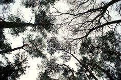Winterkamperen 31 jan - 2 feb 2014 Naaldenveld Tree Forest, Trees, Clouds, Photography, Outdoor, Outdoors, Photograph, Tree Structure, Fotografie