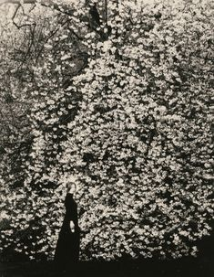 """albarrancabrera: """" 川 Kawa #1641, © Masao Yamamoto 山本昌男 Our friend and photographer Masao Yamamoto is exhibiting his work """"Small things in silence"""" 小さきもの、沈黙の中で in the gallery ValidFoto, Barcelona (Spain). The exhibition will run up to the end of July...."""