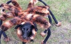 Giant Spider-Dog Prank! Must see! Hilarious!!