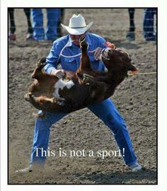 Rodeo ain't abuse. It's a thrill and adrenaline rush. It's loud and fun and a great time. So again rodeo ain't animal abuse. Cane Corso, Sphynx, Chinchilla, Wild Life, Animal Shelter, Animal Rescue, Rottweiler, Pitbull, Photo Choc