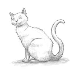 Are you looking for a tutorial on How to draw a cat? Look no further! here at the Drawing Factory you'll find a complete, step by step guide to achieve your drawing goal and much more! Pencil Drawing Tutorials, Art Tutorials, Pencil Drawings, Drawing Ideas, Cartoon Drawings Of Animals, Animal Sketches, Drawing Faces, Cat Drawing, Manga Eyes