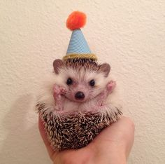 hedgehog birthday 28 Best Hedgehog birthday images   Hedgehog birthday, Hedgehogs  hedgehog birthday