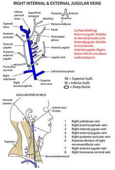 Instant Anatomy - Head and Neck - Surface - External jugular vein
