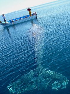 Whale watching.  Grey Whale, Magdalena Bay, Baja, Mexico. Wowza!