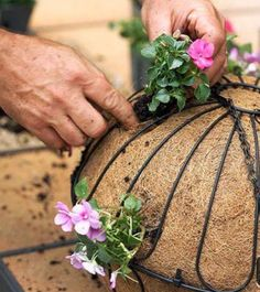 Flower Garden How to Plant a Hanging Basket - Create the perfect container garden with added height with these hanging basket planting tips. Hanging baskets look great on shepherd's hooks out in the middle of a garden, or hanging from a patio or balcony. Garden Yard Ideas, Garden Planters, Lawn And Garden, Garden Projects, Garden Landscaping, Patio Plants, Small Yard Flower Garden Ideas, Garden Tips, Deck Flower Pots