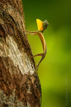 Photograph Flying Draco | Sulawesi by Petr Bambousek on 500px