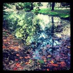 Merry #reflections ... #nature #Milan #italy #sempione