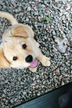 Precious pup. Pinterest: pearlxoxoxo