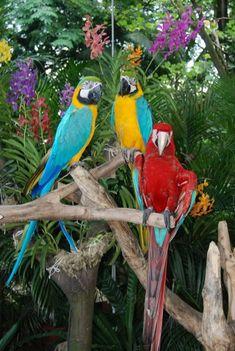 Parrots at Jurong Bird Park.