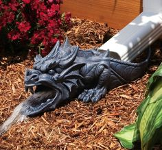 Over by your downspout! There be dragons!