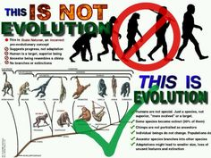 "Let's not oversimplify it... Evolution is complicated... And shouldn't portray that humans were the ""goal"" of evolution, but simply a product of it"