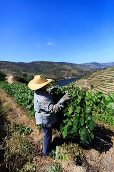 f5fe5961fcd Douro valley in Portugal 🇵🇹 Quinta Das Carvalhas Douro Valley