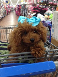 Red Poodle..RubyAnn Lee and her signature color! Attention Wallmart Shoppers!!