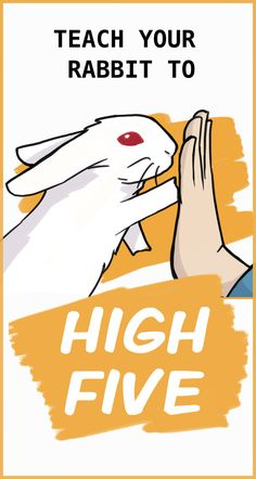 Learn how to teach your rabbit to high five with this detailed step-by-step guide! Your rabbit can also learn how to spin on command, come when you call, and give you kisses. Bunny Cages, Rabbit Cages, Rabbit Toys, Pet Rabbit, Pet Bunny Rabbits, Bunny Bunny, Diy Bunny Toys, Rabbit Life, House Rabbit
