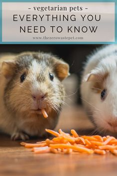 The Best Vegetarian Pets: Everything you need to know - The Zero-Waste Pet Love Your Pet, Your Dog, Guinea Pigs, Guinea Pig Breeding, Animals For Kids, Cute Animals, Building For Kids, Pet Rabbit, Dog Care