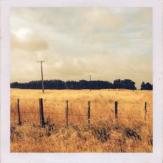 New Zealand road tripping, iPhone picture, Manawatu, NZ.