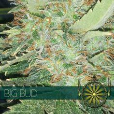 Bud, Plants, Plant, Human Eye, Planting, Planets